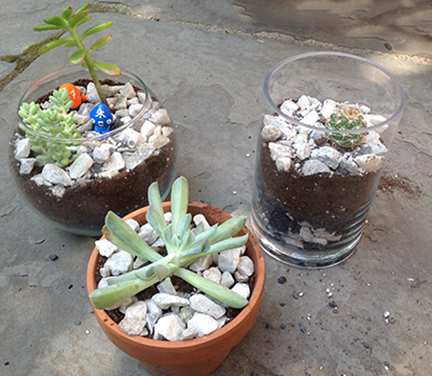all three terrariums