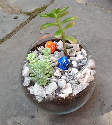 jamie's terrarium