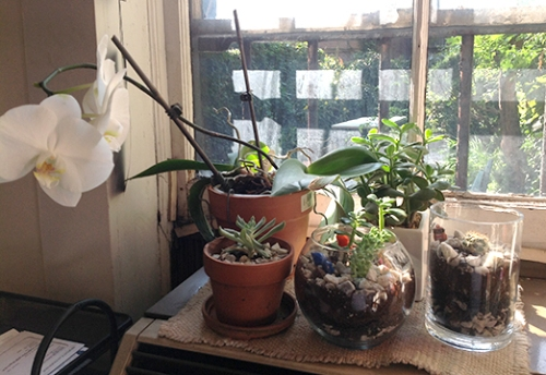 plants on sill